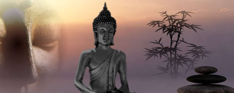 buddha assis plante et pierre