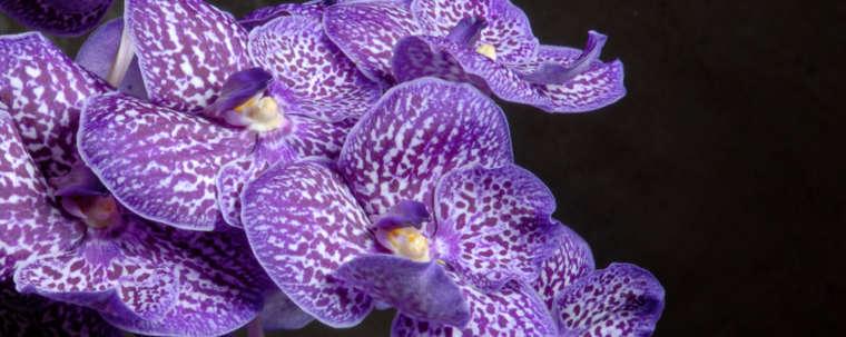 Fleur orchidée mauve photographie par Studio Jocelyn