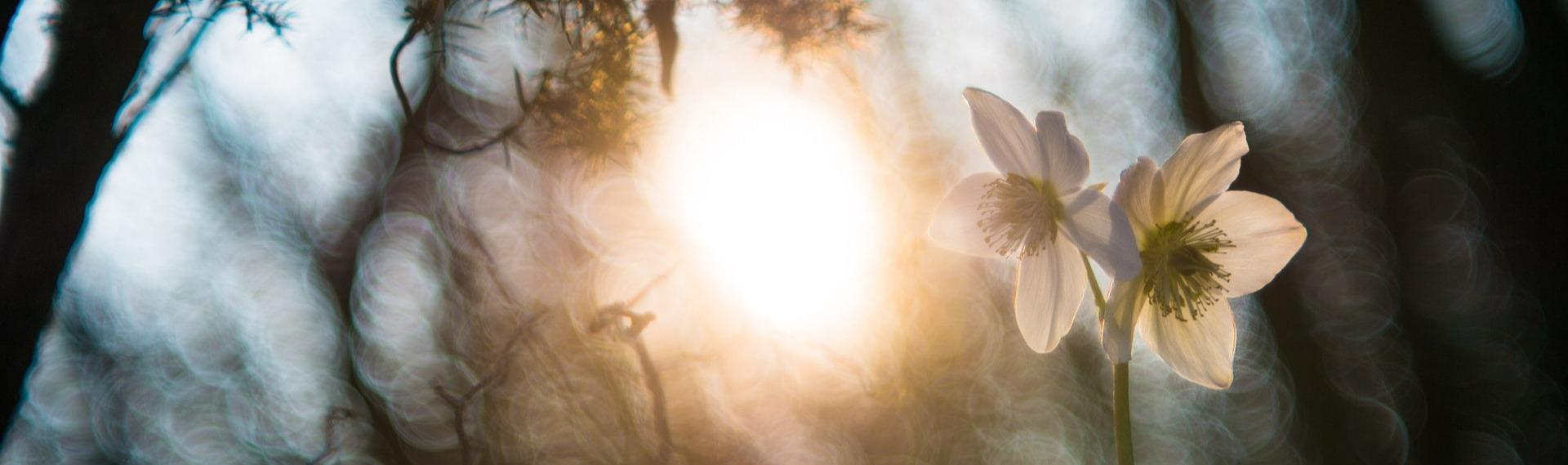 Impression d'optimisme dans un détail d'une clairière avec la lumière du soleil sur une fleur blanche