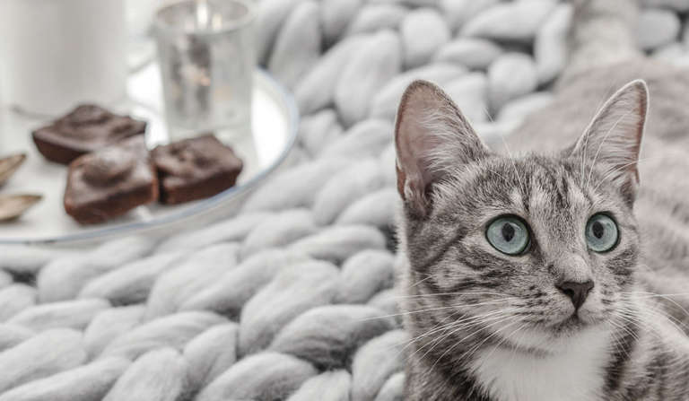 Image reposante d'une tasse à café et des gâteaux dans un plateau posé sur un plaid à grosses mailles grises où est allongé un chat